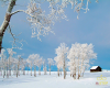 THE COMMON DISEASES IN WINTER